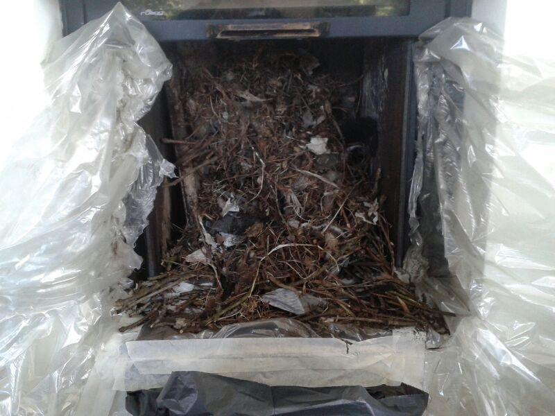 vogelnest-verwijderen